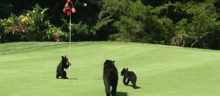 Bears Golf